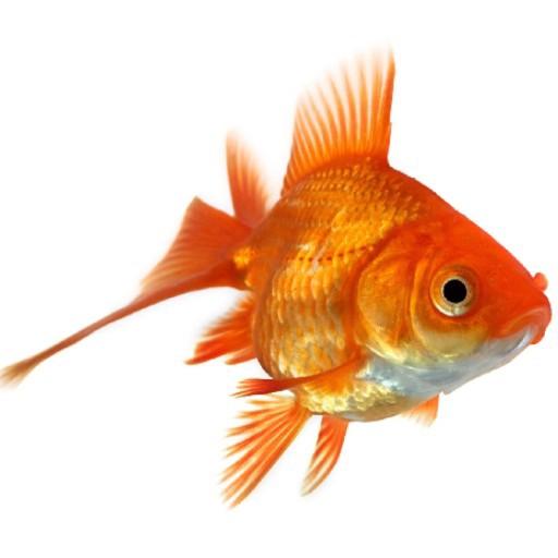 Cad 3D Free Model free Animali  pesci