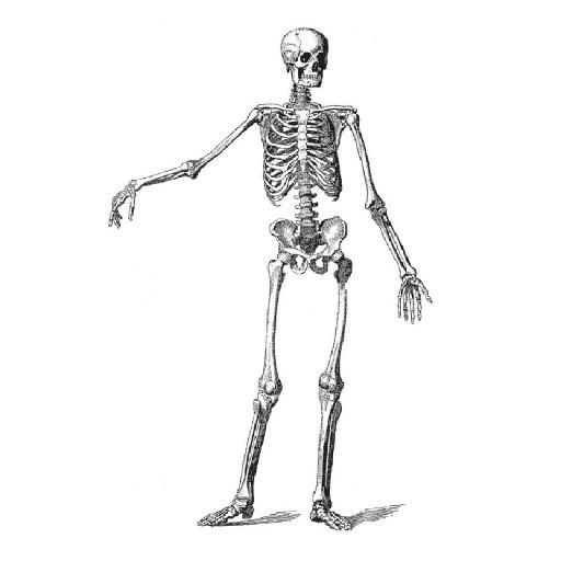 Cad 3D Free Model free Persone  anatomia