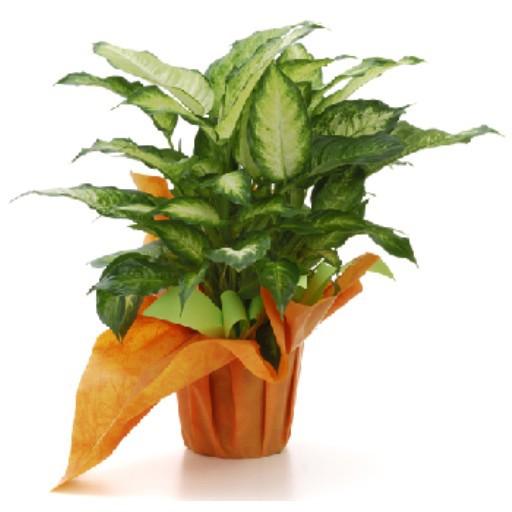Cad 3D Free Model piante